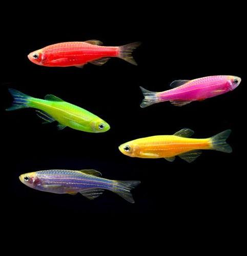 Glofish agazoo for Clever fish names
