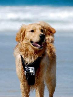 Kurgo Dog Harness With Camera Mount 1