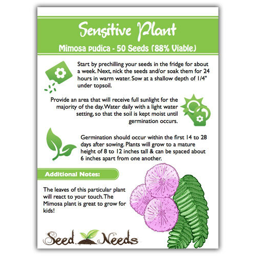 Mimosa - Sensitive Plant Seeds 2
